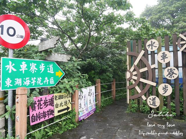 陽明山水車寮步道繡球花