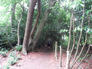 Path in Brockhurst Wood