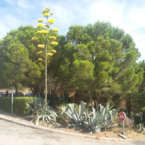 Ces plantes qui ne font pas semblant de fleurir