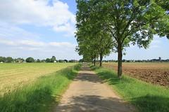 Hertogenpad_LAW13_NL_wandelen_d4_11