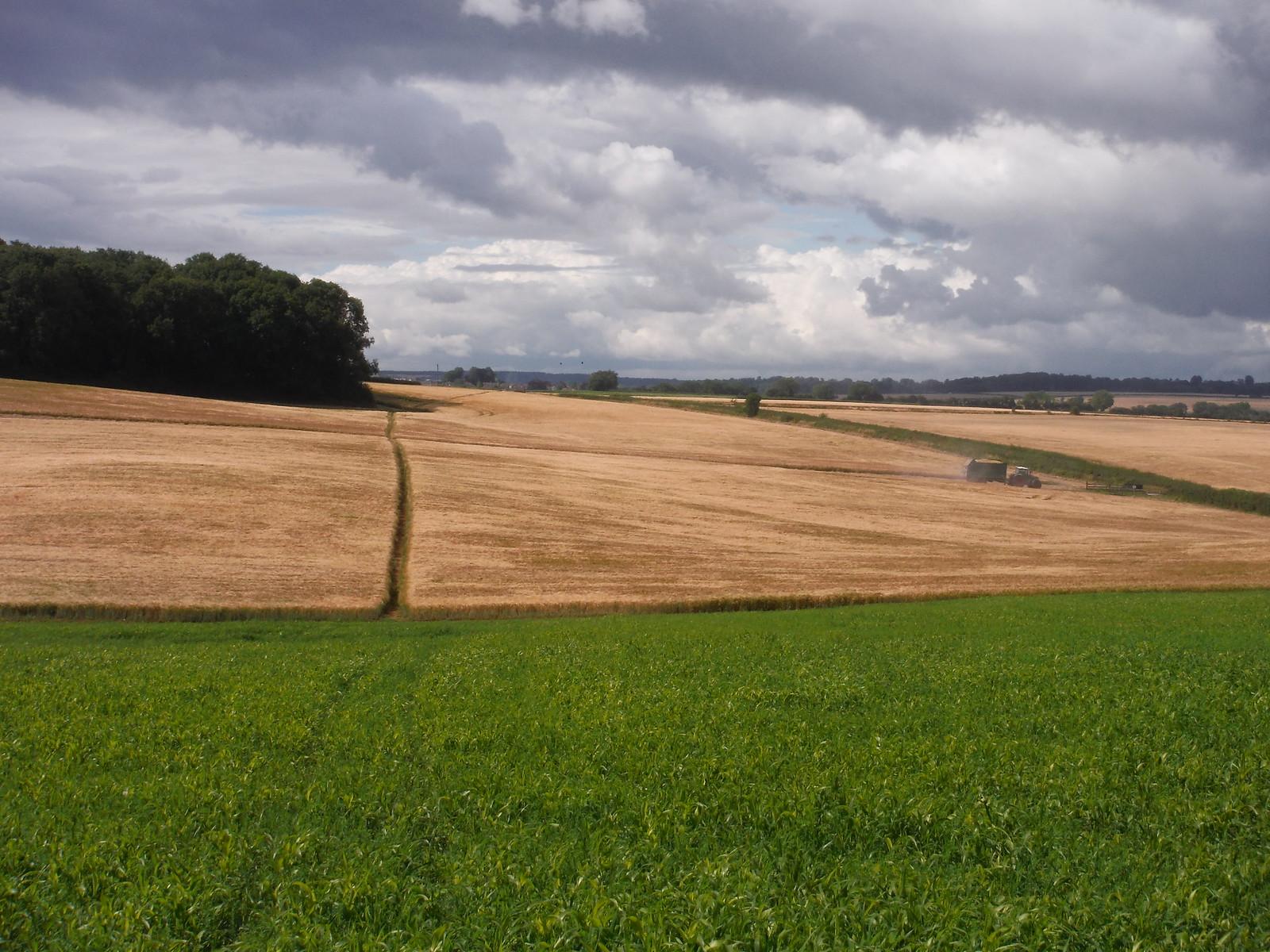 Through fields near Totterdale Farm SWC Walk 252 Tisbury Circular via Donhead St. Andrew