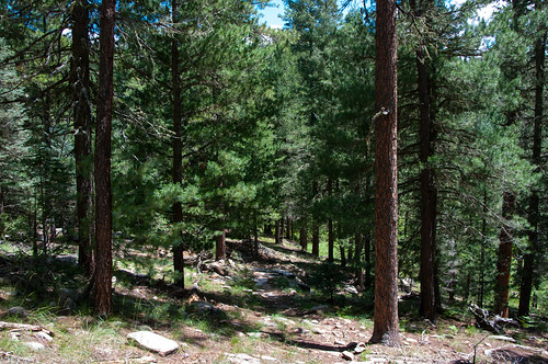 Trails: Cabin Loop Trail System