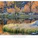 Lake Shore, Autumn Morning by G Dan Mitchell