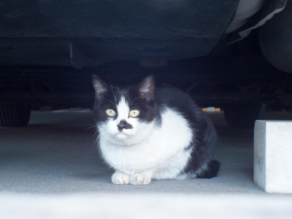 Stray cat f/4