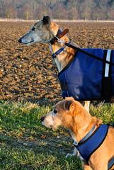 Little Whelnetham Sunday Walk, George And Tigger
