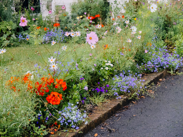 pretty flowers in garden