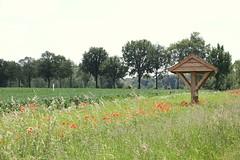 Hertogenpad_LAW13_NL_wandelen_d4_08