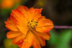 Orange macro moment