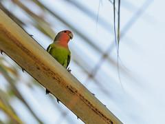 Epupafalls, oiseaux