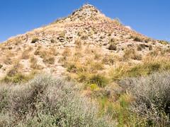 prairie, steppe, mountain, shrubland, hill, flora, geology, natural environment, fell, meadow, landscape, wilderness, badlands, grassland, mountainous landforms,