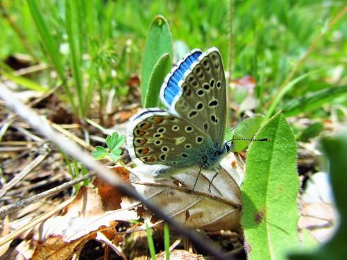 Butterfly 609