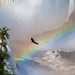 waterfalls, rainbow and vulture