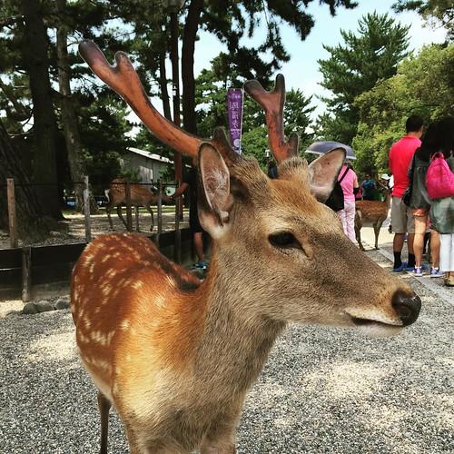 今天在奈良玩儿鹿的时候有好多人正在隔空诉苦,我说「看看鹿,开心点儿。」