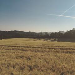 Morning jog (un renard se cache dans ce champ)