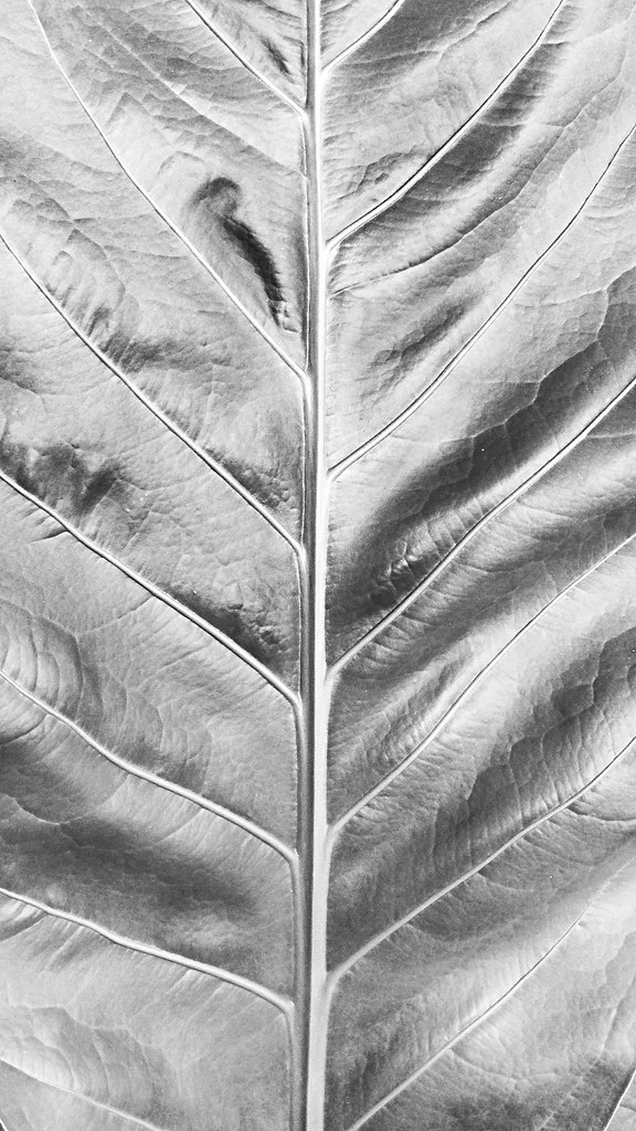 It's a Leaf