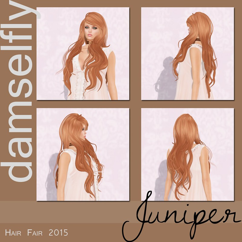 Damselfly at Hair Fair 2015