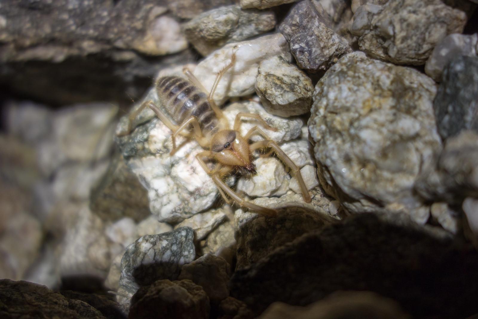 1507 Sun Spider