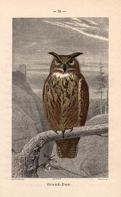 012- Alphabet illustré des oiseaux- 1885- MM. Travies-BNF