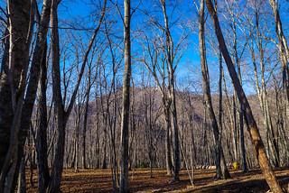 樹林の向こうに見えるお山は日蔭名栗山