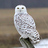 the Owls group icon