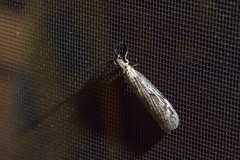 Porchlight Bugs