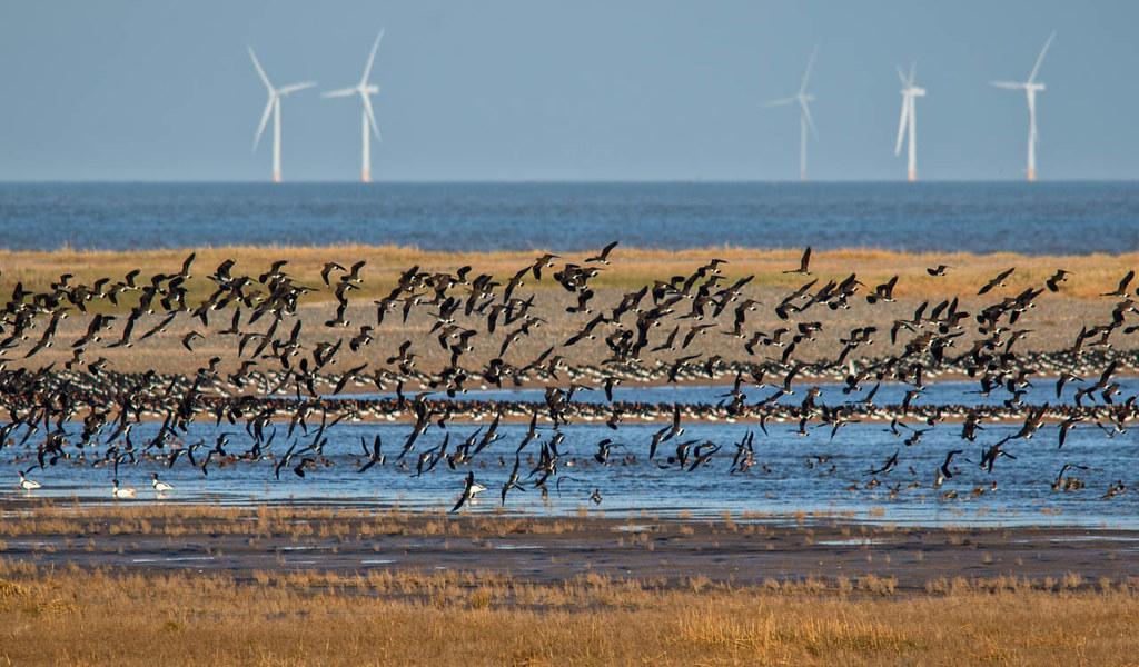 Talacre Bird Reserve