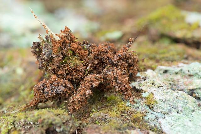 Masked hunter assassin bug (Reduviidae) - DSC_3898