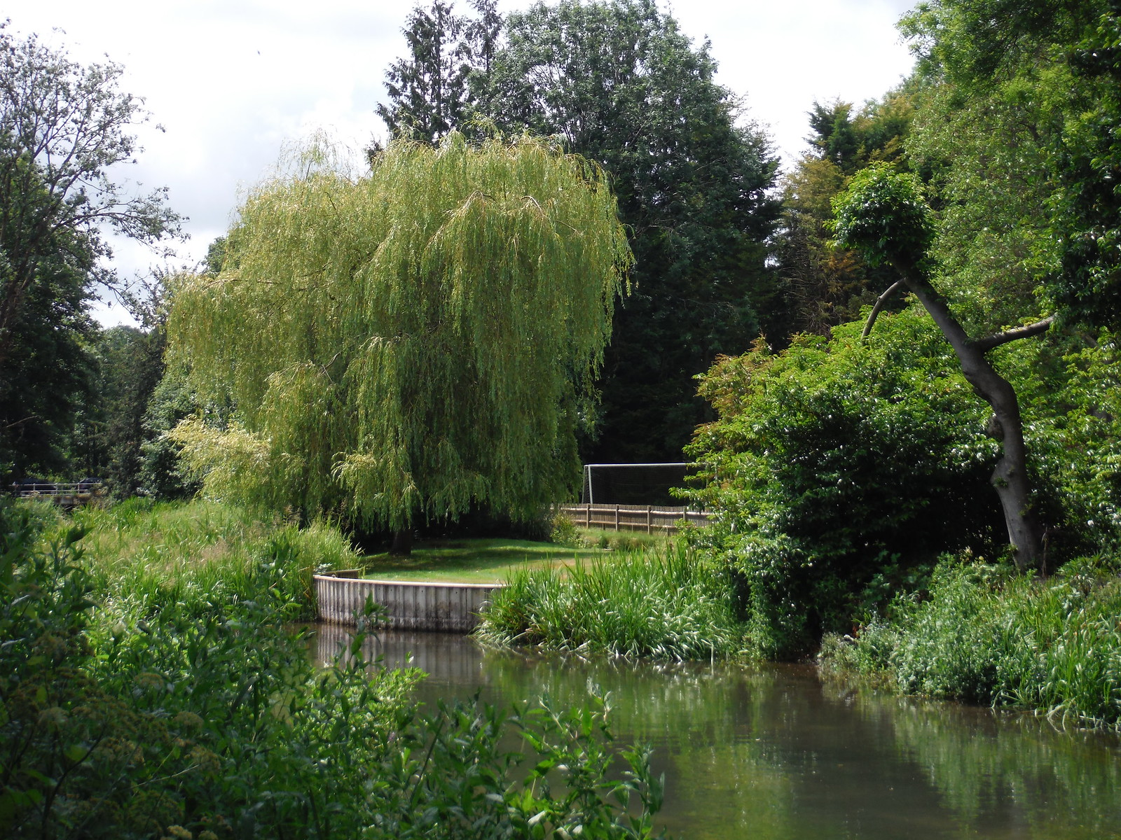 Willow Tree in Shawford SWC Walk 15 : Winchester Circular
