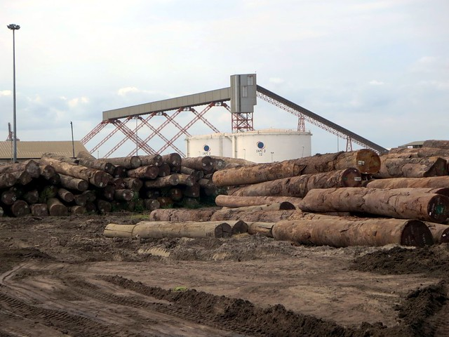 Rainforest Logs