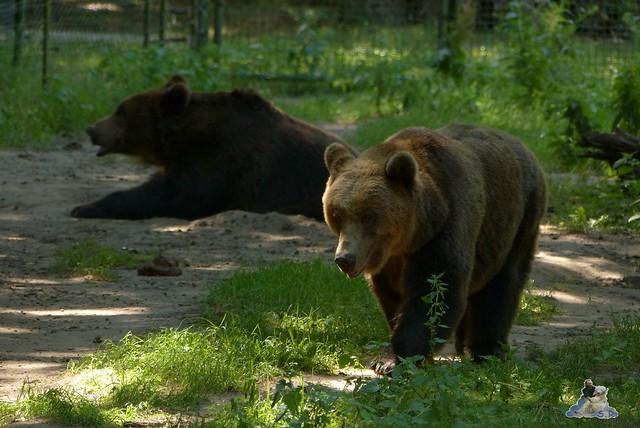 Tierpark Perleberg 09.08.2015 55
