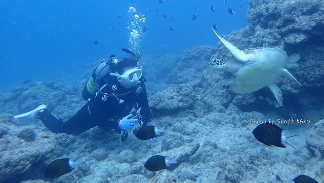 アオウミガメとMさん
