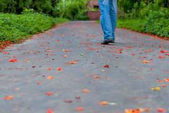 asphalt, sidewalk, leaf, red, road surface, autumn,