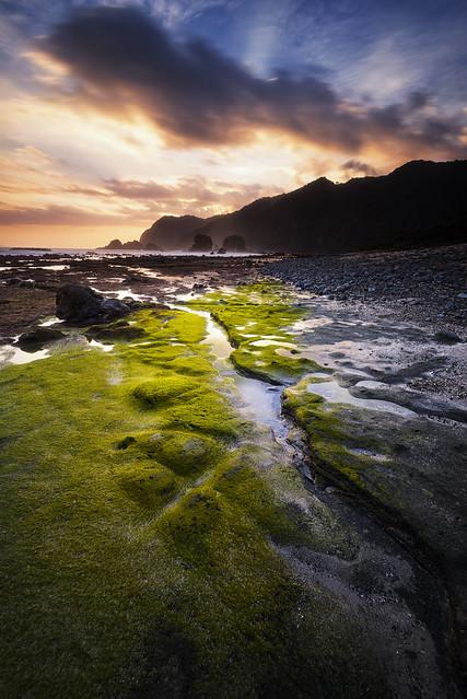Papuma Green Path