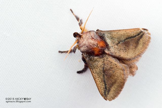 Moth - DSC_4075