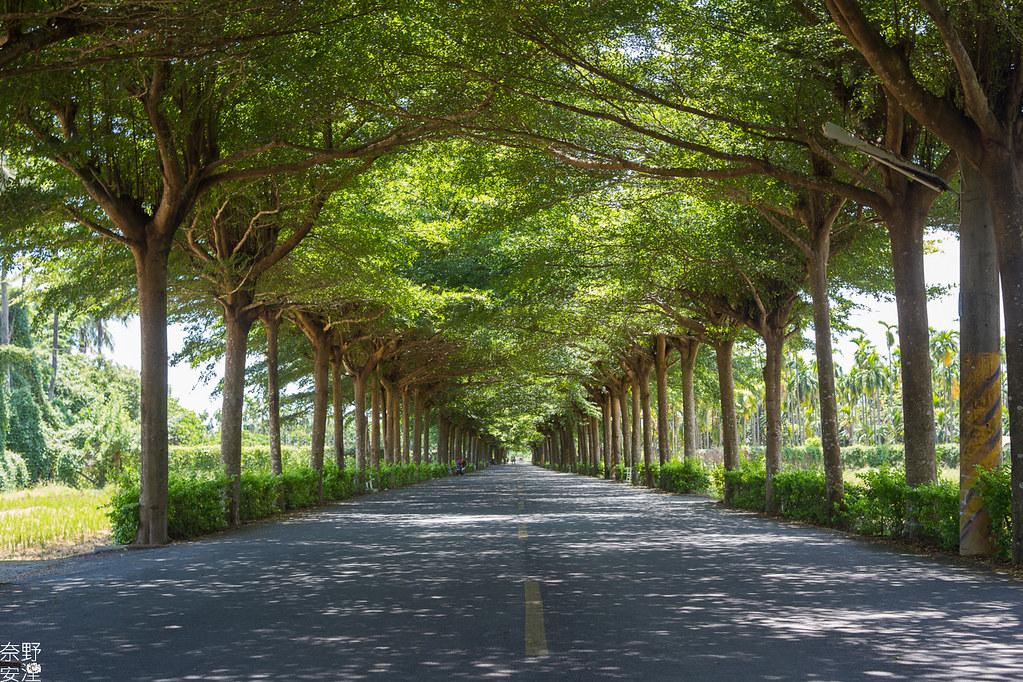潮洲泗林綠色隧道 (5)