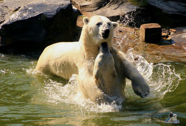 Tierpark Berlin 02.08.2015 032