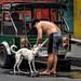 Dog Wash on the Street by FotoGrazio