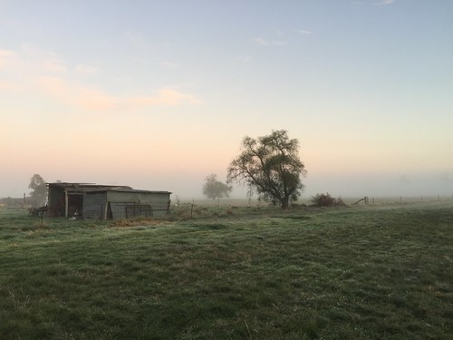 Farm shed in fog