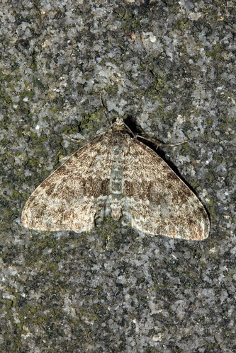 Grey Mountain Carpet 0823