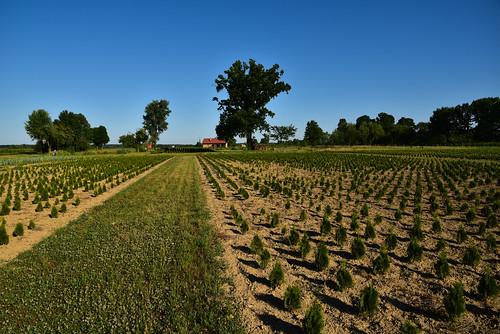 plants landscape nikon croatia d750 plain horticultural gradište