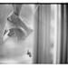 底片課功課 3-19 / Noctilux / Hexar RF / Kodak Tri-X 400 by 深白色 (Arys Chien)