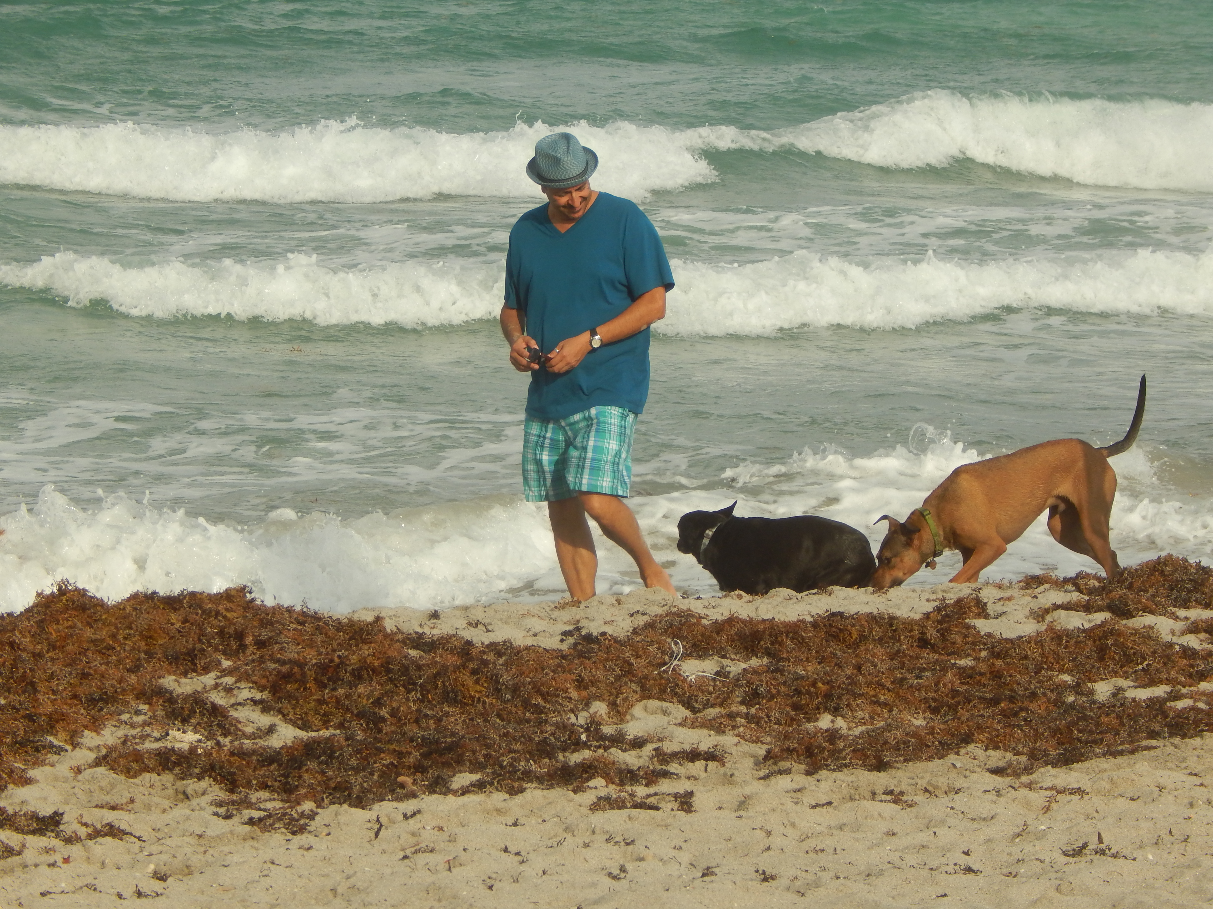 Hollywood Dog Beach   N Surf Rd Hollywood Fl