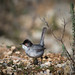 Sardinian Warbler at Boca do Rio by Maxwell Law Photography LRPS