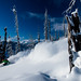 Skiing through burned trees by Last Frontier Heliskiing