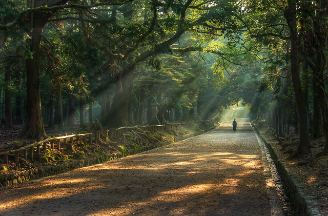 Morning in Kasuga Forest
