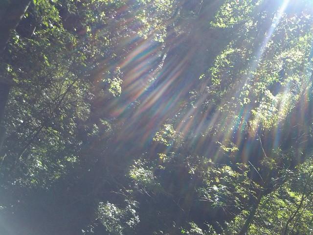16065拉拉山巨木群