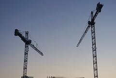 DC Dance of the Cranes 59104