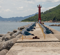 Gull pier