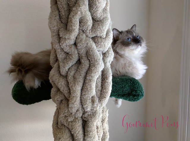Whiskers & Paws July 2016 Edition (5)