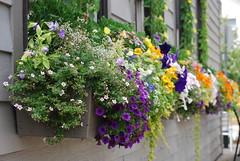 Douglas Michigan Flowers in Bloom